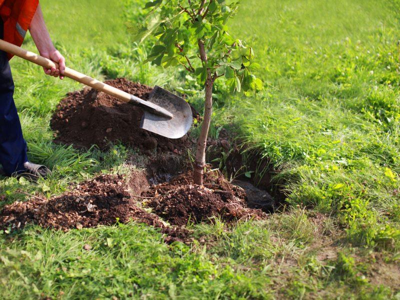 replant-tree.jpg.1440x960_q100_crop-scale_upscale